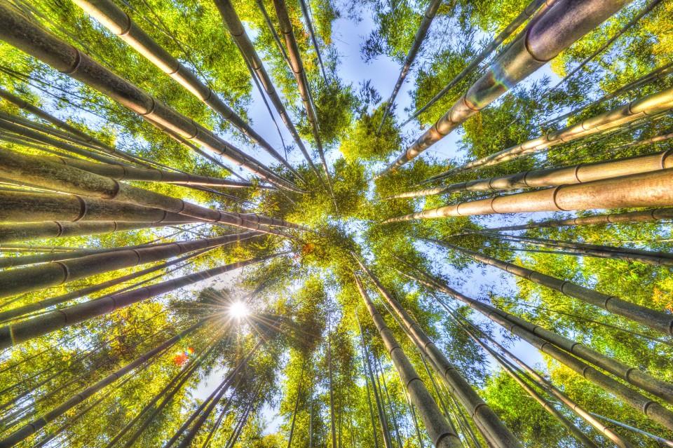 Exploring Korea's biggest Bamboo forest
