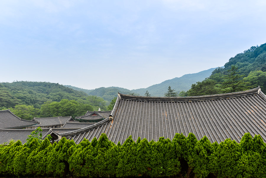 Temple roofs Bridge to Paradise: A Korean Temple Stay at Magoksa